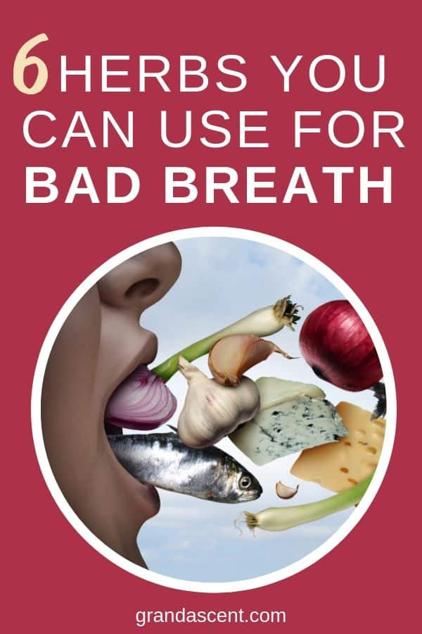 Herbs for bad breath