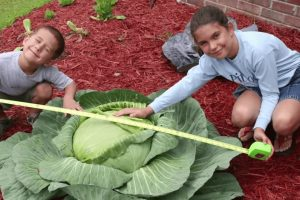 Katie and her giant cabbage