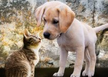 Adorable kitty and puppy