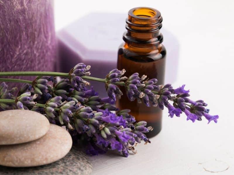 Lavender oil bottle and lavender flowers