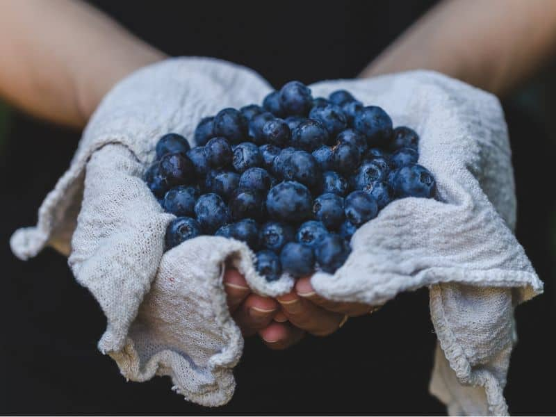 A handful of fresh blueberries