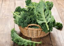Freshly picked kale in a basket